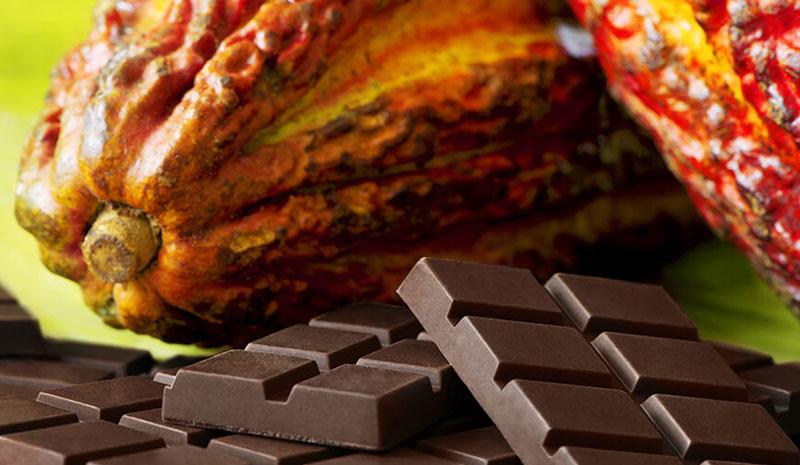 Cacao variedad criollo (Amaranthus Caudatus)