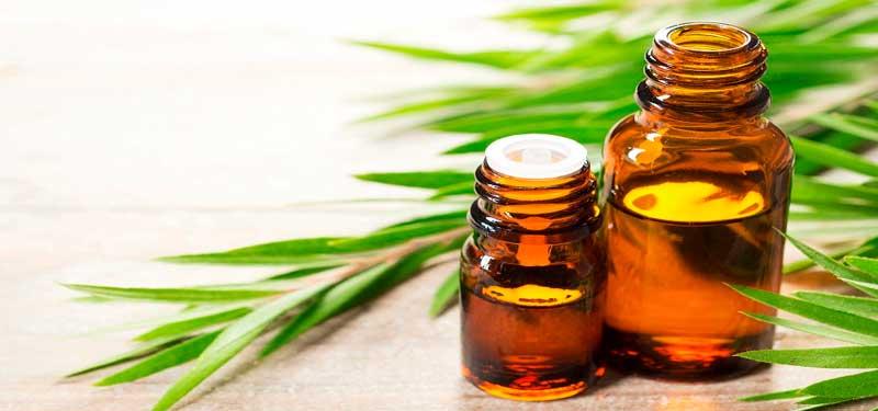 Aceite de Arbol de té, el mejor aceite esencial