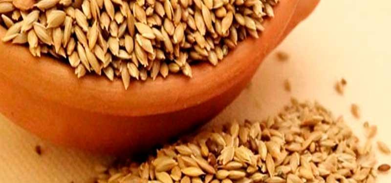 Alpiste, información de propiedades para adelgazar y colesterol