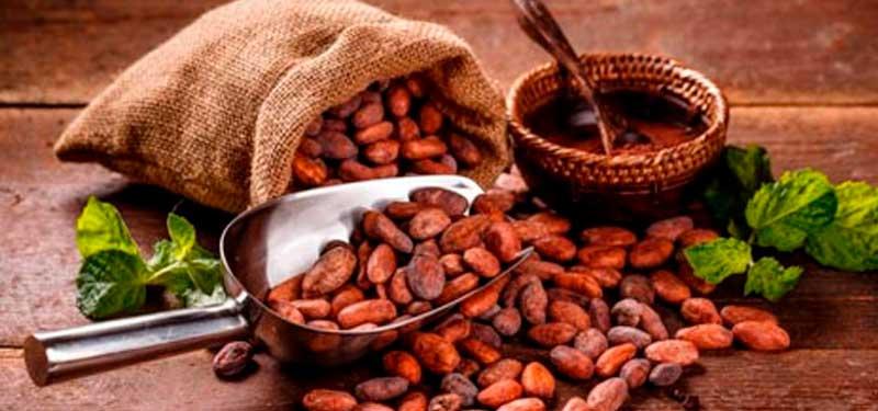 Cacao Amazónico: Alimento con alto poder nutritivo y energético