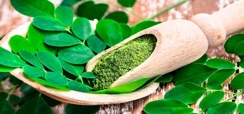 Moringa: Beitrag zur Ernährung und gesundheitlicher Nutzen