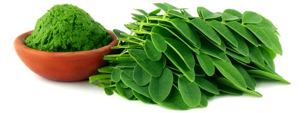 La Moringa: apport nutritionnel et bénéfices pour la santé