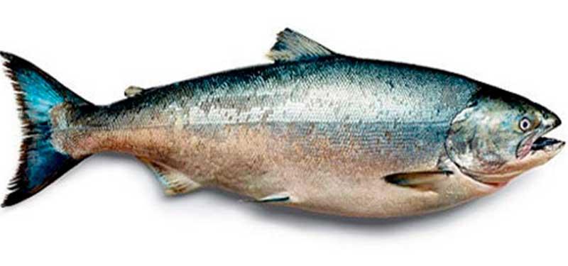 Aceite de Salmón, excelentes propiedades y fuente en omega 3