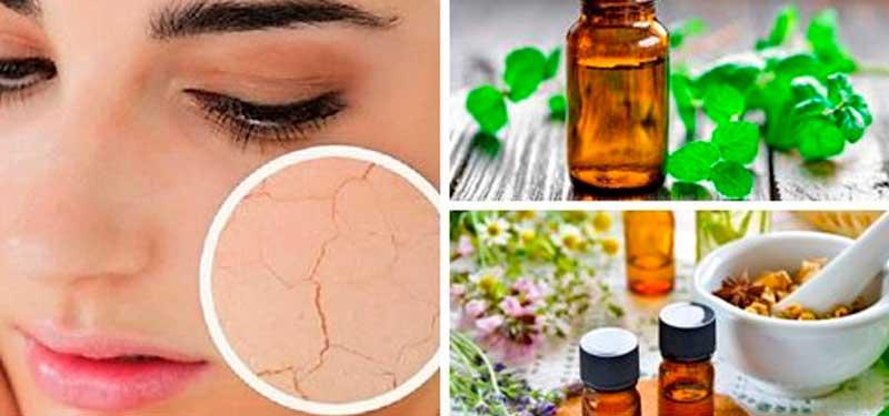 Rosa Mosqueta, óleo de poder de regeneração de cicatrizes da pele