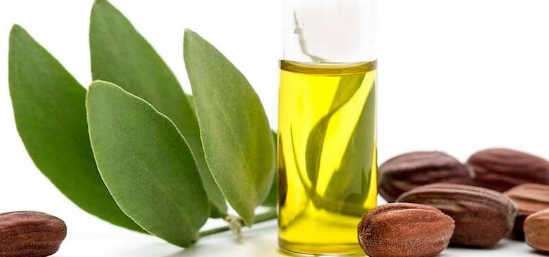 Jojoba, el aceite para el cabello y la piel