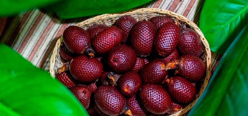 Aguaje, fruto Amazónico rico en fitoestrógenos