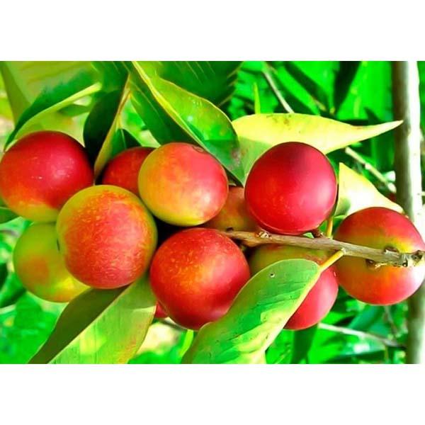 Camu Camu, una de las más importantes fuentes de vitamina C